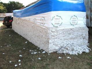 algodón, masiva