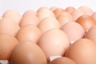 los huevos grupo de objetos