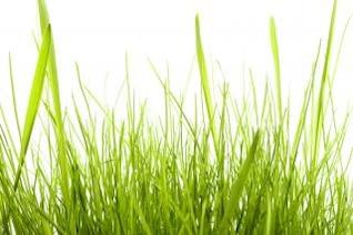 la hierba frente a nadie