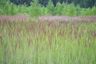césped campo de hierba