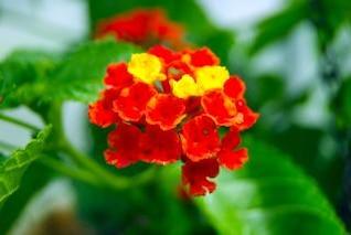 Flores pequeñas, en racimo
