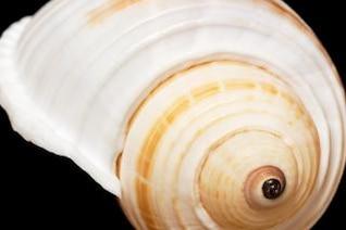 concha de mejillón mar