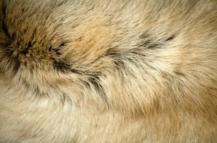 los animales de pieles de perro
