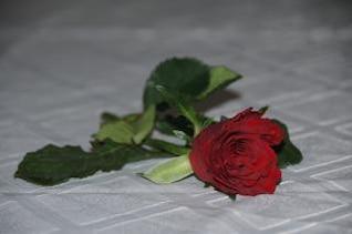 sola rosa roja