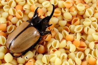 pasta de escarabajo