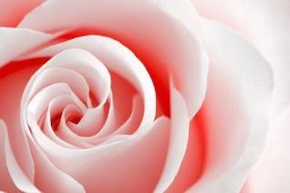 clave de alta rose monocromática