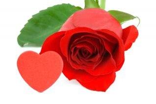 rosa roja close up ronda