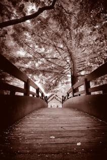 hojas sepia puente