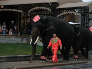 elefantes y entrenador en el santuario de circo