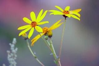 flores silvestres de verano