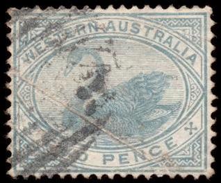 cian cisne sello
