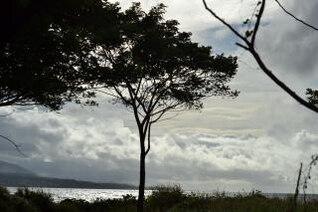 árboles y ramas silueta