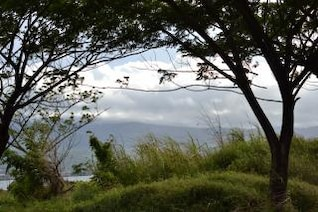 árbol de silueta ventoso