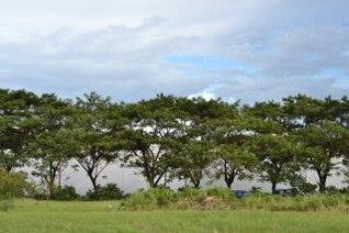 la línea de árboles