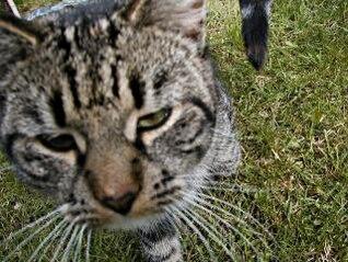 close-up de gato, ojos