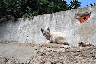 gato blanco y marrón
