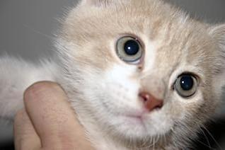 close-up gatito