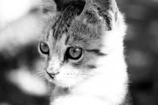 close-up gato, peludo