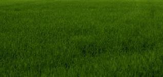 textura de la hierba verde, hierba