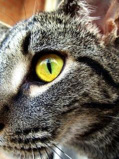 gato, animales, gatos