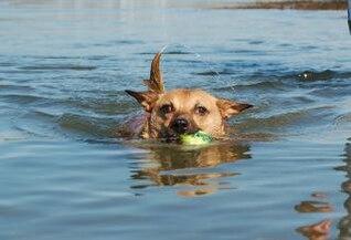 apoyado a nadar