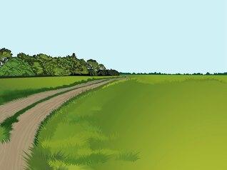 Paisaje verde con la carretera