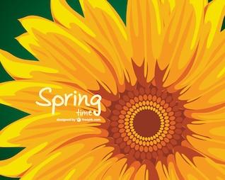 Fondo de primavera con girasol