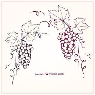 Ilustración vectorial uvas
