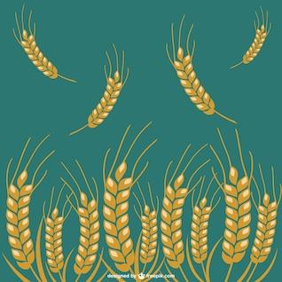 Fondo con brotes de trigo