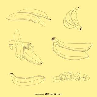 Bocetos de plátanos