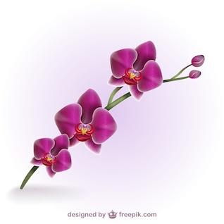 Orquídea artística a color