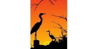 Las aves garza silueta