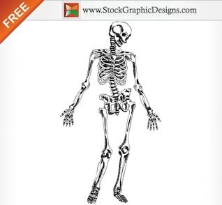 Dibujado a mano esqueleto humano ilustración vectorial gratis