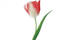 055 flores vectoriales