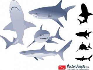 Tiburón fresco siluetas imágenes vectoriales