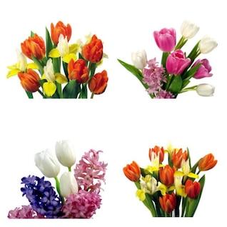 tulipanes imágenes de alta definición