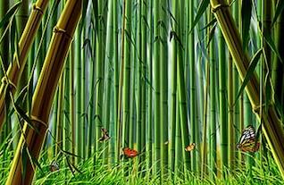 de bambú y la mariposa psd material en capas