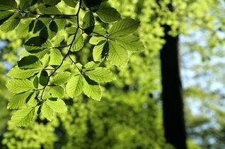 vitalidad de las hojas verdes material de imagen