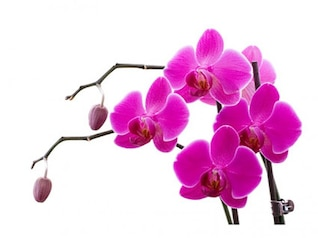 orquídea blanca material de imagen