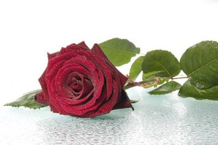 grandes rosas rojas de material de imagen