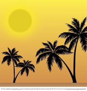 árboles exóticos en la puesta del sol