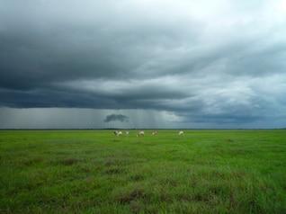 Ovejas detrás de un cielo tormentoso