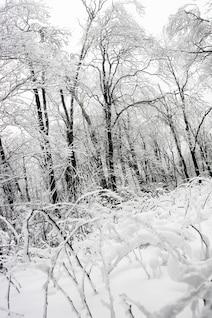 Bosque congelado blanco