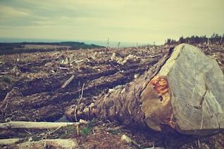 Tronco de un árbol en el suelo