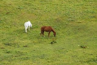 Caballos en la pradera