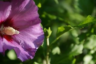 Detalle de flor morada