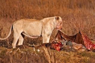 león presa nsfw