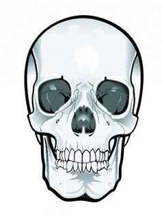 Frontal del cráneo clipart