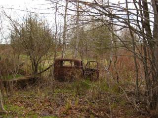Accidente de coche en el bosque