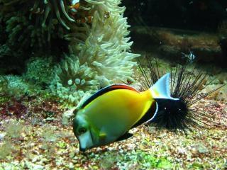 acuario en el museo oceanográfico, en Mont-